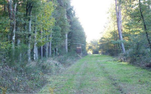 Territoire de chasse a vendre en Sologne - Propriétés de Sologne