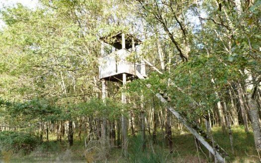 Territoire de chasse 38 hectares - Propriétés de Sologne