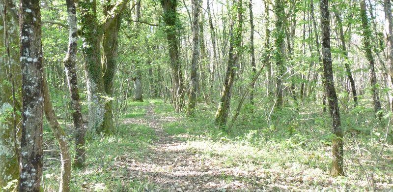 Territoire de chasse sur 38 hectares