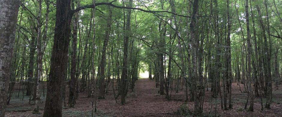 Territoire de chasse sur environ 90 hectares